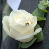 Ushers white Rose buttonhole
